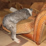Zelfs als ze sliep was ze grappig :-)